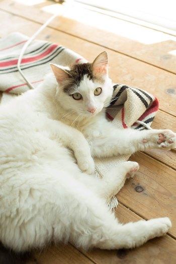 ヒラクさんの自宅兼発酵ラボには愛猫も。対談中も、気ままにヒラクさんの周りのぶらぶら