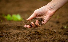 野菜づくり初心者が知っておきたい、土づくり4つのコツ