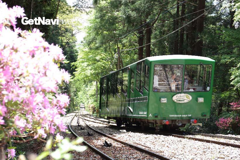 ↑四季それぞれの花が楽しめる筑波山。筑波山ケーブルカーの行き違い地点付近では、5月ごろツツジの花が楽しめる