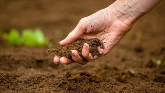野菜づくり初心者が知っておきたい「土づくり4つのコツ」
