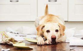 犬の立場になって考えよう! 愛犬のキモチをもっと知る方法
