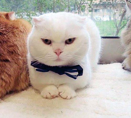 白猫マリン(Instagram=@yoko_1011)