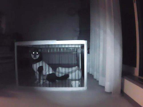 ↑「夜間、ケージに入っているみくの様子。電気を消した状態でも映像はクッキリです!」