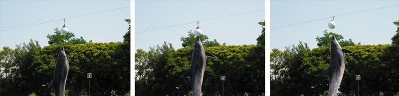 ↑この構図で撮影した場合、E-PL5では背景の草木にピントが合ってしまったが、E-M1マークⅡではイルカに正確に合焦した。しかも連写コマ数が多いので、口の先がボールに当たった瞬間もしっかり記録できている