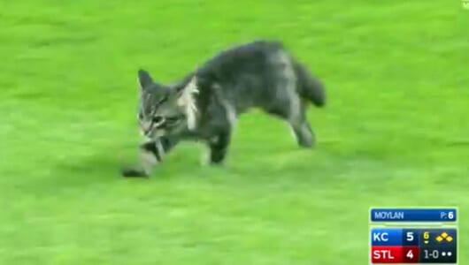 MLBの試合に「幸運のネコ」! 会場を沸かせた直後、劇的展開を呼び込む