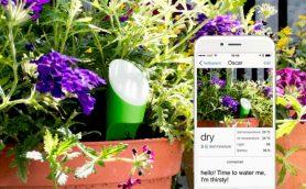 もう植物を枯らさない! 「自動水やりデバイス」で植物との付き合い方が変わる