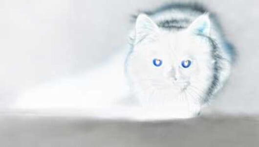 【ムー実話怪談】死んだ猫が赤ちゃんになって戻ってきた!? 不思議な夢とともに飼い主が体験した「生まれ変わり」の神秘