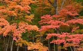 【最終回答】プロ直伝「紅葉を鮮やかに撮る」機材&カメラ設定の超基本