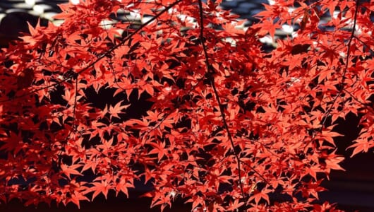 【紅葉シーズン到来!】紅葉で「曇り」だったらどうする? 天候別・キレイな紅葉の撮り方