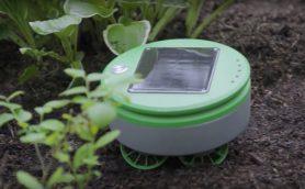 ルンバが草刈り機に変異!? ロボット掃除機の開発者が作った「Tertill」は雑草駆除が大好き