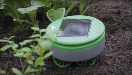 ルンバが草刈り機に変異!? 太陽電池で動くロボット「Tertill」は雑草駆除が大好き