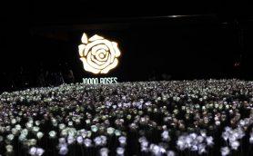 夜に輝く1万本のホワイトローズ――セブ島で話題のロマンチックすぎるカフェ