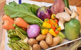 有機野菜より希少な「テロワール野菜」とは? 宅配野菜の最新形態を「ココノミ」に見た!