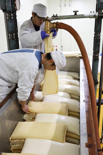 ↑槽搾りの光景。発酵した醪を布袋に入れ、ひとつひとつ槽の中に並べ、ゆっくりと上から圧力をかけて搾る方法。手間がかかるため、この方法で搾る蔵は全国的に減っています
