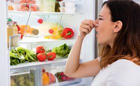 「ウチの冷蔵庫…クサっ」とならないために! 最新5モデルの冷蔵・冷凍「以外」の機能を家電のプロが徹底チェック