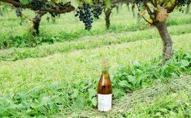 北陸から日本ワインを新定義する、「SAYS FARM」を訪ねる