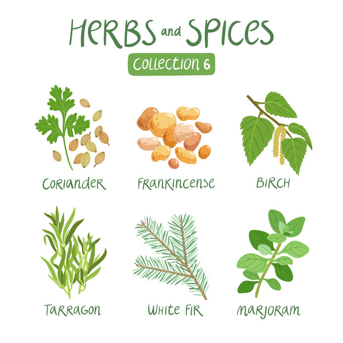 44519944 - herbs and spices collection 6. for essential oils, ayurvedic medicine