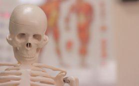 骨が全身の健康を制御する!? 骨から生まれる「オステオカルシン」にイノッチも興味津々