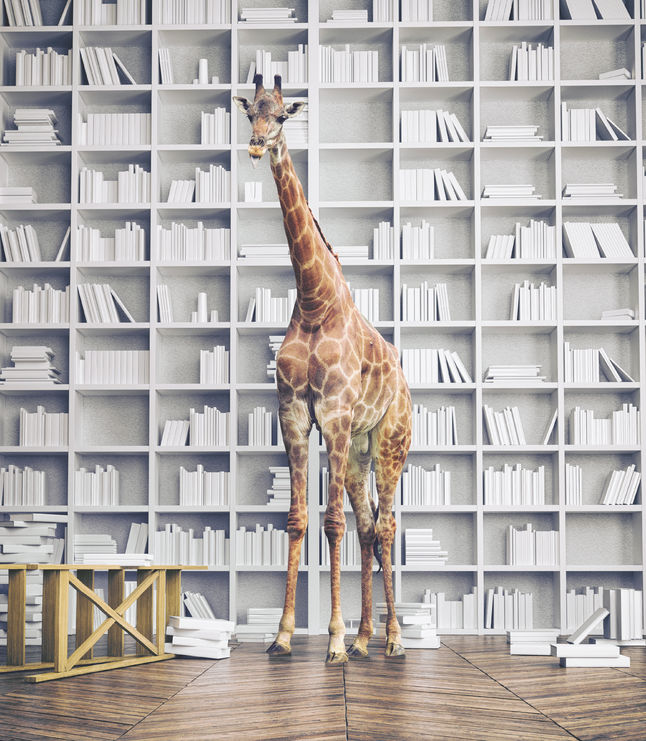 56812229 - giraffe in the room with book shelves. creative photo combination concept