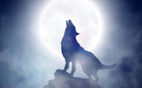 人狼とSNSの意外な共通点とは?