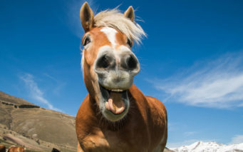 55228430 - funny shot of horse with crazy expression