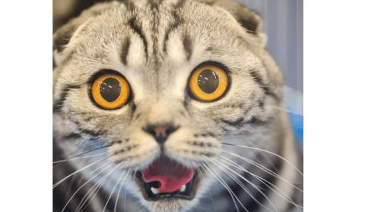 あなたの猫が、こんな異物を吐いたら要注意!