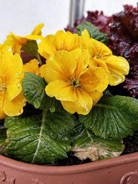 ↑ポートレートモードで撮影。花びらの色はくっきりと、背景はぼけて対象物が際立つ