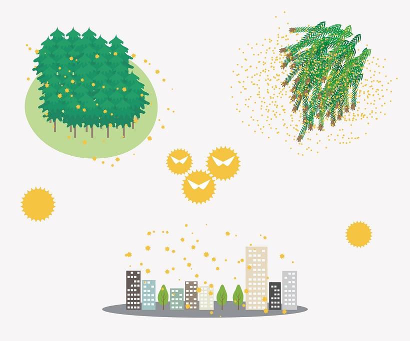 ↑花粉のイメージ。花粉表面のトゲがアレルゲンとなります。花粉はアスファルト上だと地面に吸収されないため、降り積もった花粉は風で巻き上げられることになります