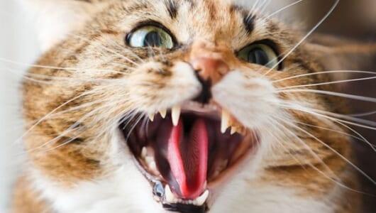 猫がこんなポーズをとったら要注意!? 不機嫌を表す4つのサイン