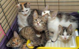 野良猫に救いの手をさしのべる。スマイルキャット物語
