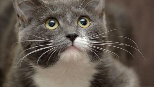 猫の恩返し? それとも偶然? 「猫にまつわる不思議な話」