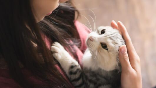 災害時に不安を抱える飼い主は9割以上! 自分と猫の避難計画を立ててますか?