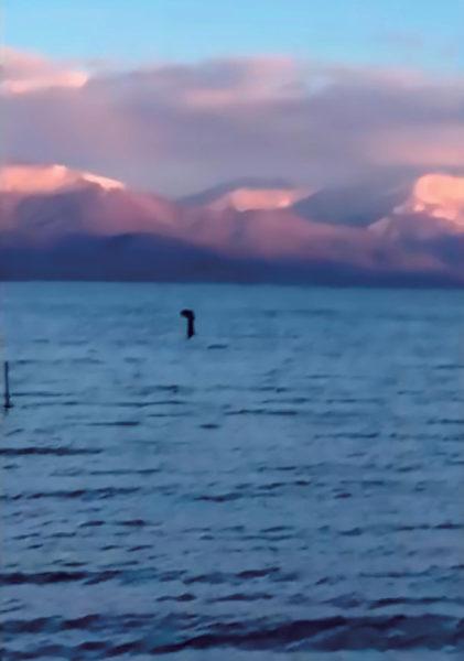 【ムー最新UMA情報】アルバニアの大プレスパ湖でネッシー型の巨大生物が撮影された!