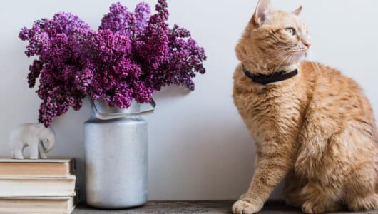 犬猫を室内飼いするには? ペットと快適に暮らせる家づくり