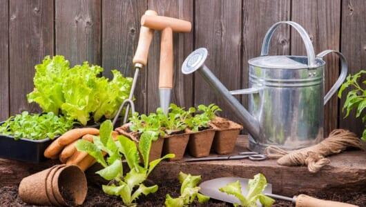 週末農園やレジャー農園が人気。露地栽培から始める家庭菜園のススメ