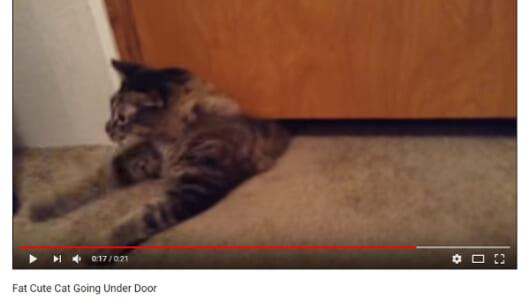 【可愛すぎる動物動画】もふもふの太った猫さん、本気を出して自然の法則を覆してしまう
