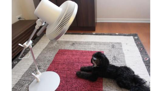 「これは使い続けたくなる!」アームが曲がる扇風機「カモメファン」に家電ライターがどハマりした理由