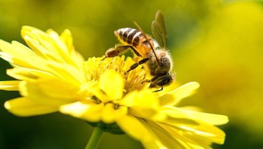AI研究者にも衝撃! サルや鳥に続いてミツバチも「ゼロ」を理解していた