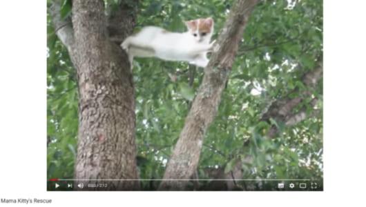 【可愛すぎる動物動画】手を差し伸べるだけが教育じゃない!? 子猫を助ける親猫の姿に学ぶ人間たち