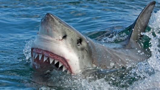 「サメ映画」ブームがきている昨今。実際にサメに襲われる可能性は?