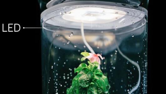 「水やり忘れた!」でも大丈夫。自動で「植物」の世話をしてくれるガジェットが急上昇中