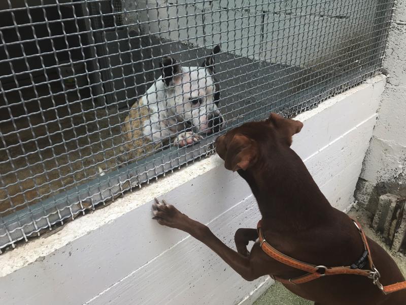 ライフスタイル:動物のための「ミサ」をご存じ? イタリアの動物保護 ...