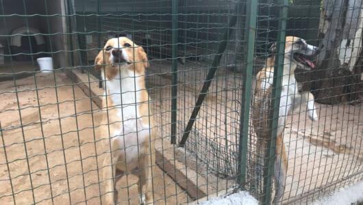 動物のための「ミサ」をご存じ? イタリアの動物保護施設で出合ったプチ奇跡体験