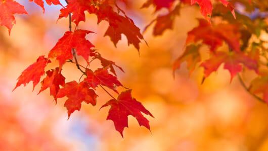 【季節の英語コラム】「紅葉」「紅葉を見に行く」って英語でなんて言う?