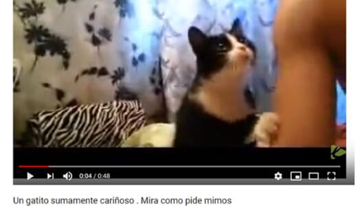 【可愛すぎる動物動画】飼い主の腕をポンポン&スリスリする姿に悶絶! 甘え上手な子猫が話題に