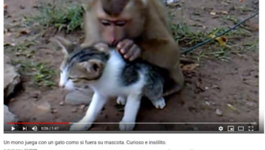 """【可愛すぎる動物動画】猿の""""愛""""からは逃れられない!? 逃走を試みる猫の姿に思わずクスリ"""