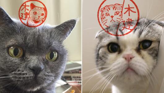 無駄に押印したくなる…愛猫のとっておきの一瞬を印影にできるはんこ作成サービス