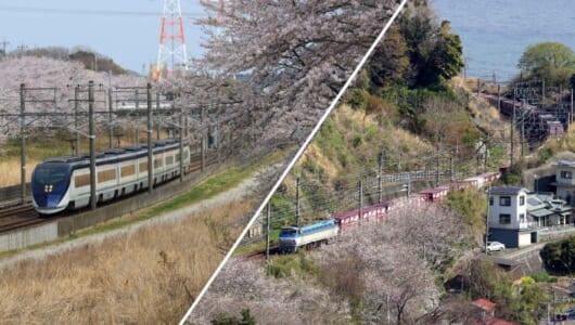 【2019年版】全国津々浦々を巡った鉄道ライターが薦める「桜と鉄道」撮影スポット集(後編)