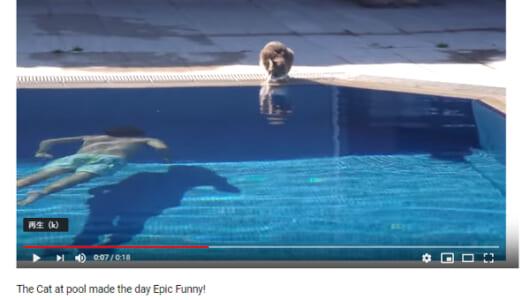 【必見オモシロ動画】ジョーズのテーマが聴こえてくる…? ドッキリにハメられたネコが大パニックに!
