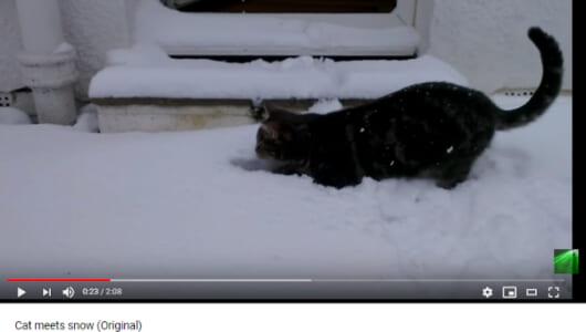 前足ハマって「何だこりゃ!?」 雪に出会ってはしゃぐネコ様に癒される